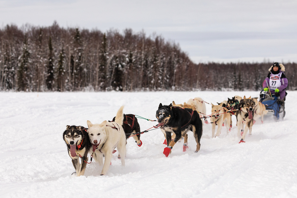 Musher Marcelle Fressineau after the restart in Willow of the 47th Iditarod Trail Sled Dog Race in Southcentral Alaska.  Afternoon. Winter.
