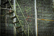 one of the big cage for reintroduction at Sungai Pengian Station, they keep the orang utan in the station and teach them how to survive and live inside the jungle.