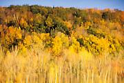 Reflection of fall scene in lake.