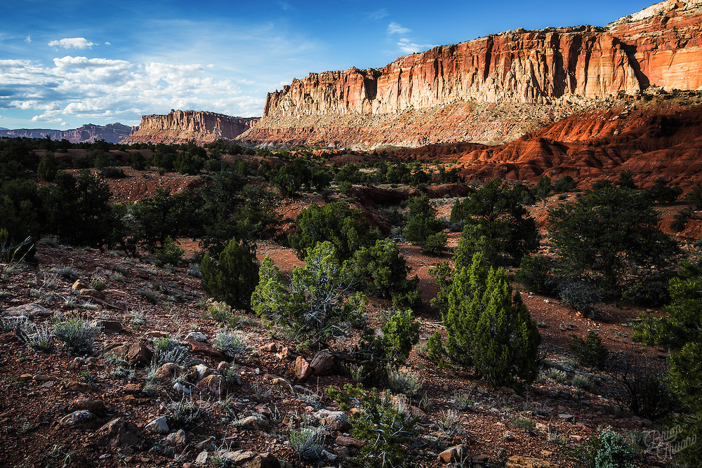 The great Waterpocket Fold of Capitol Reef National Park is a formation known as a Monocline. This uplift along the sedimentary basin occurred 65 million years ago. The reef stretches a little over 100 miles across the Utah landscape and is the largest exposed monocline in North America.