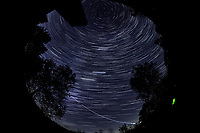 Star Trails looking Up (01:30-02:29). Composite of images  taken with a Nikon D850 camera and 8-15 mm fisheye lens (ISO 800, 10 mm, f/5.6, 30 sec)
