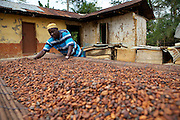 Freddy Akuffo has been a cocoa farmer since 1969 when he inherited his farm from his father. Since he received his training, as part of the Kraft Cocoa Partnership, Freddy has seen his yield increase from 180 bags of cocoa a year to 220.