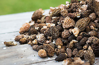 Morel mushrooms.