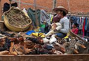 Selling chickens and ducks on Rue Andriamanelo, Antananarivo, Madagascar.