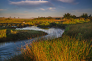Stream flowing through coastal marsh wetlands at Limantour Beach, Point Reyes National Seashore, Marin County, California