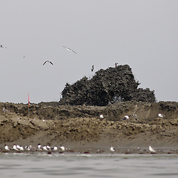 Mud flies into the air as a sand dredge works to build up land on a small barrier island east of Grande Terre Island near the coast of Louisiana, U.S., on Tuesday, June 15, 2010.  Oil from Deepwater Horizon spill continues to impact areas across the coast of gulf states. (Mandatory Credit: Derick E. Hingle).