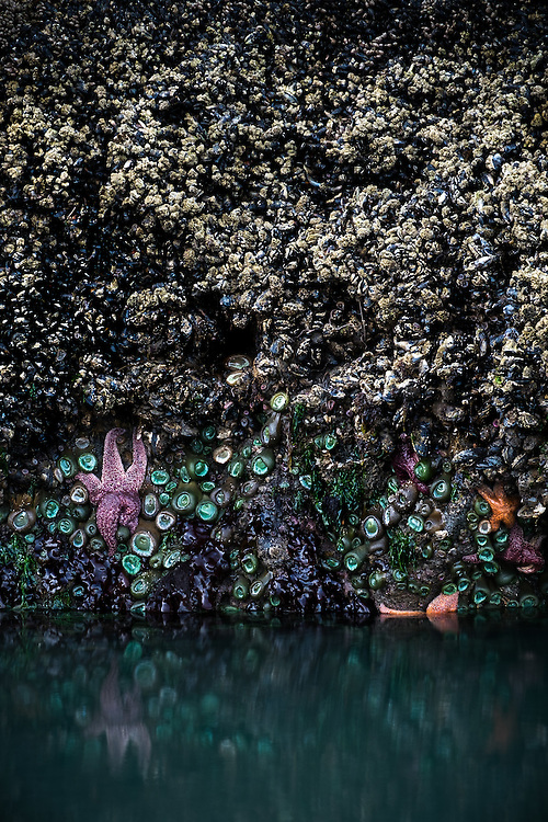 Gold Beach, Cape Sebastian on the Southern Oregon Coast | July 26, 2014