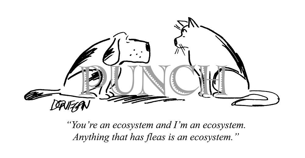 """""""You're an ecosystem and I'm an ecosystem. Anything that has fleas is an ecosystem."""""""