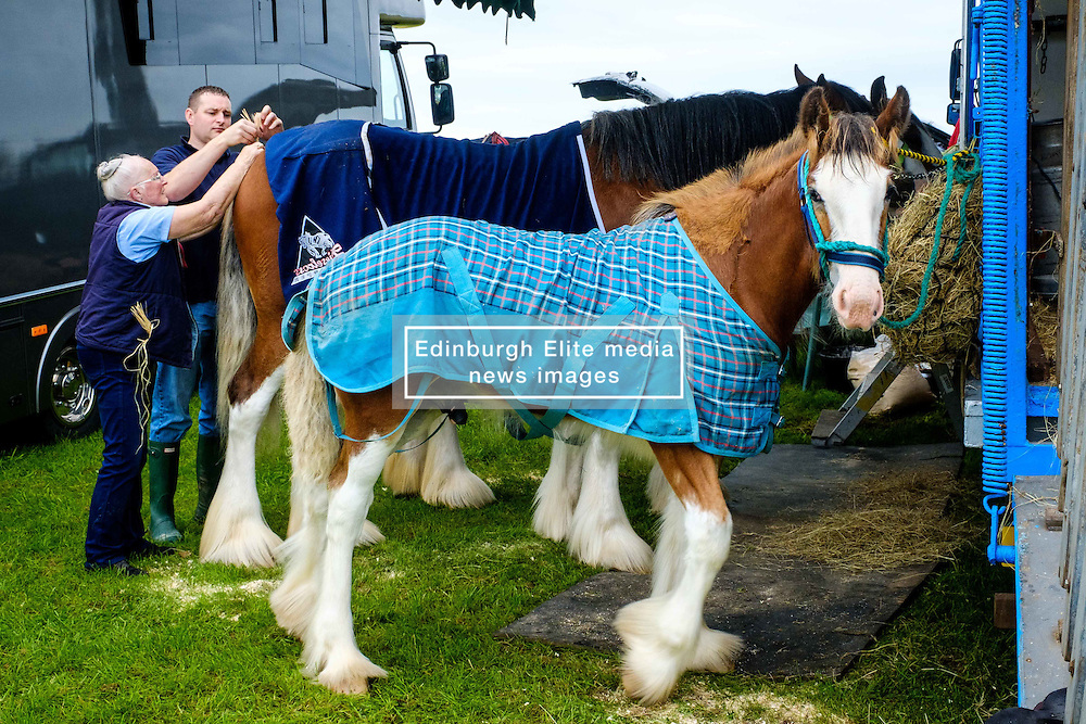 Biggar, South Lanarkshire, Scotland 23 July 2016<br /> <br /> Preparing horses for showing.<br /> <br /> <br /> (c) Andrew Wilson | Edinburgh Elite media