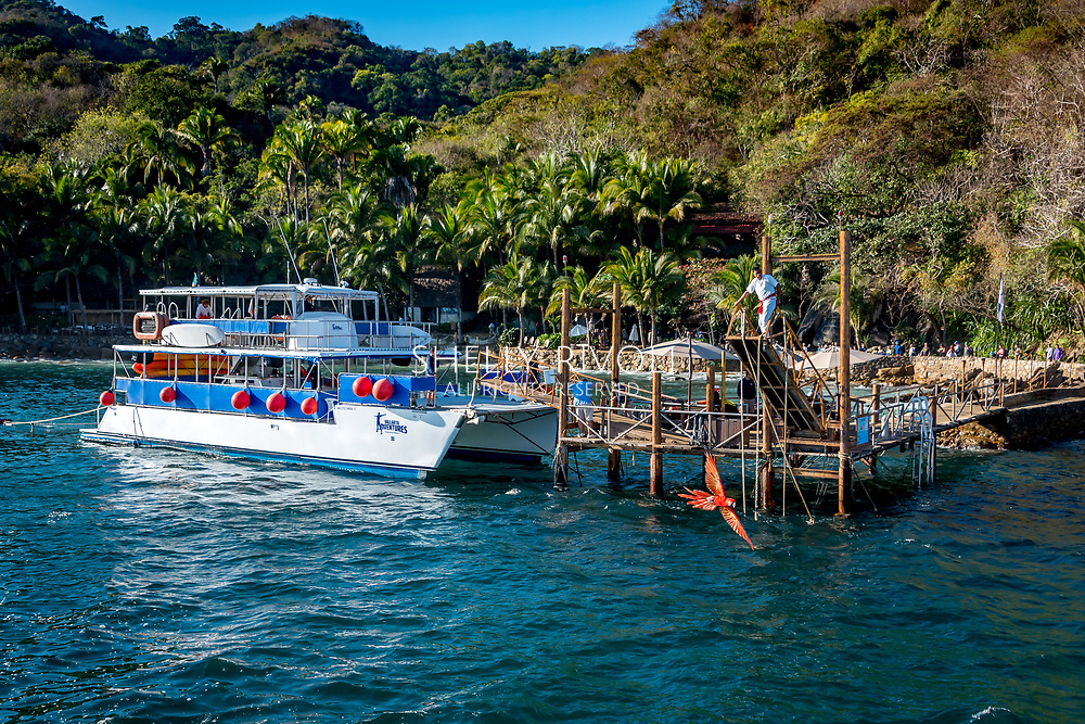 Arrival at Las Caletas, a popular day trip destination 12 miles from Puerto Vallarta, accssible only by water. Here a scarlet macaw flies out from the dock to great visitors to the beach resort paradise. A highspeed catamaran for Vallarta Adventures is seen at the dock.