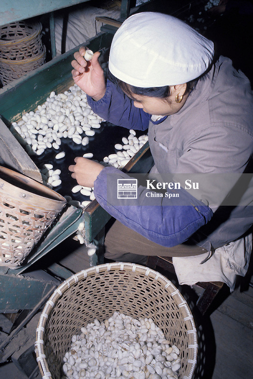Selecting silk cocoons for silk-making proces at the silk factory, Hangzhou, Zhejiang Province, China