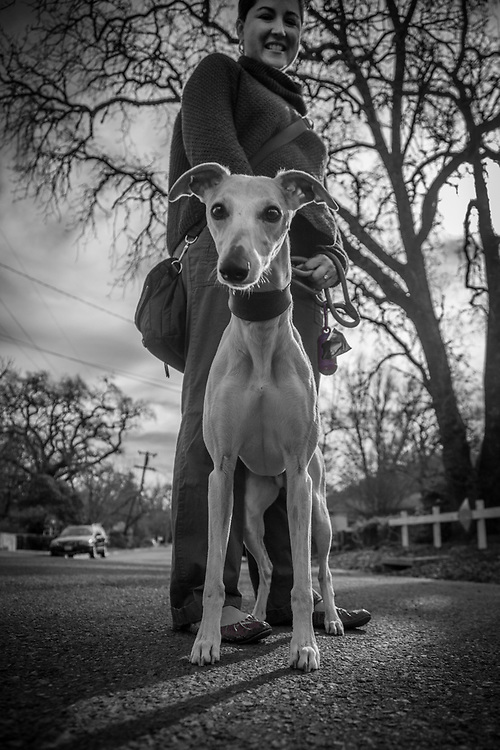 """Veronica Saleh with her Whippet, Andretti, on a morning  Valentines Day walk  in Calistoga   """"Our home is in Palo Alto, though we often stay at our home here in Calistoga."""""""