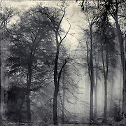 Nebel umh&uuml;llte B&auml;ume im kaiser-Wilhelm Hain, Wuppertal<br />