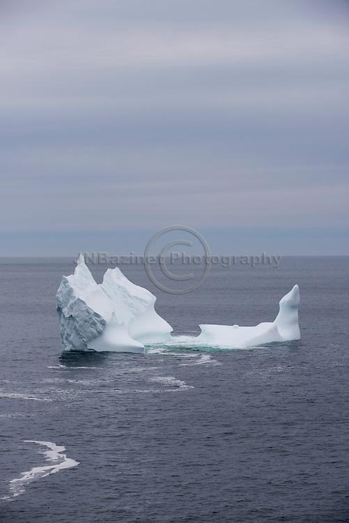 Newly arrived iceberg in Torbay, Newfoundland Labrador Canada