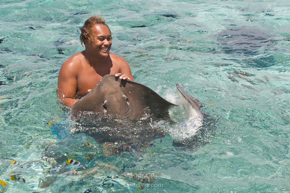 A local polynesian man is surrounded by large stingrays and reef fish in the Bora Bora lagoon. Bora Bora is one of the Leeward Islands in the Society Islands archipelago of French Polynesia.
