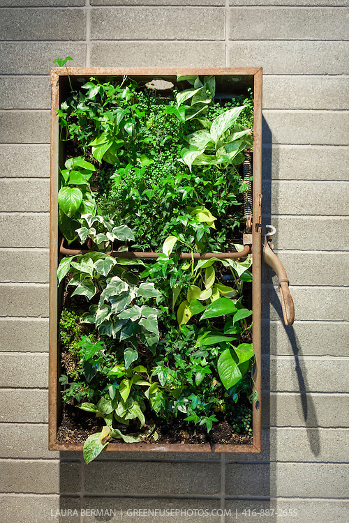 Living wall greenfuse photos garden farm food - Building a living wall ...