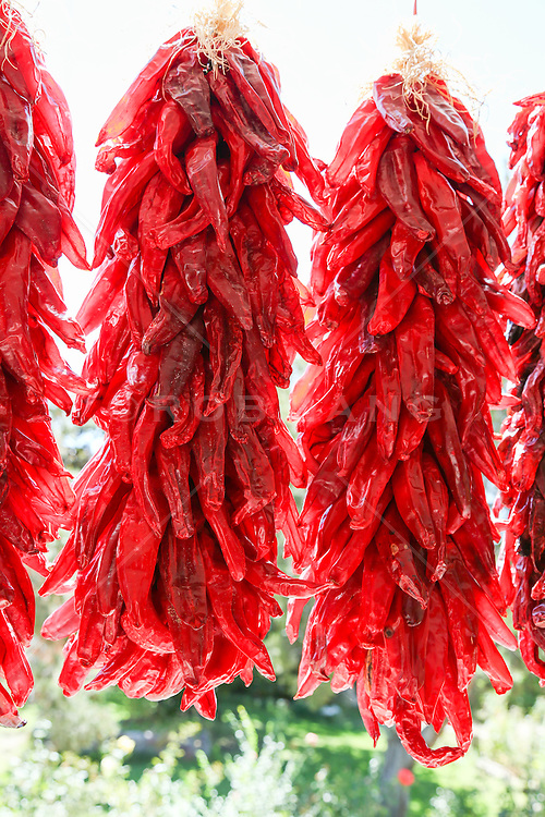 colorful chili peppers hanging outdoors