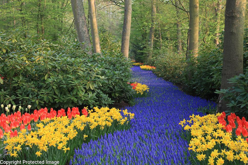 Flower Garden in Holland
