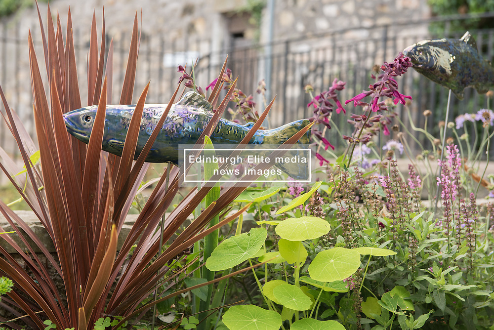 Portobello, Edinburgh's seaside suburb, is awash with Art. Almost everywhere you look there is something to see as the Art Walk Porty community art festival takes place, now extended to run over ten days covering the first two weekends of September. Pictured: Ceramic fish created by Alison Robinson, one of the members of the Bridge Pottery collective <br /> <br /> <br /> © Jon Davey/ EEm