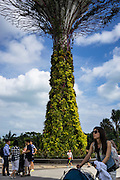 """Tree-like structures called Supertrees dominate the 'Gardens by the Bay' landscape with heights of up to 50 metres. These vertical gardens perform a multitude of functions, which include planting, shading and working as environmental engines for the gardens. Fitted with environmental technologies that mimic the ecological function of trees – photovoltaic cells that harness solar energy which can be used for some of the functions of the Supertrees, such as lighting (mimicking photosynthesis in nature); and collection of rainwater for use in irrigation and fountain displays, (mimicking rainwater absorption for growth in nature). The Supertrees also serve air intake and exhaust functions as part of the conservatories' cooling systems.<br /> Gardens by the Bay is an integral part of a strategy by the Singapore government to transform Singapore from a """"Garden City"""" to a """"City in a Garden"""". The stated aim is to raise the quality of life by enhancing greenery and flora in the city. Photo by Suzanne Lee/Panos Pictures"""