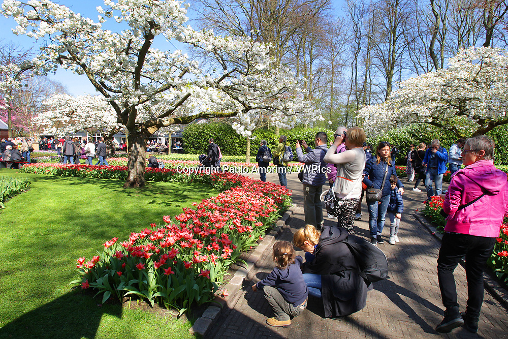 Daily Life - People take the picture and enjoying at Keukenhof Park on April 4, 2017 in Lisse,Netherlands. Keukenhof known as the Garden of Europe, a spring park with approximately seven million flower bulbs.