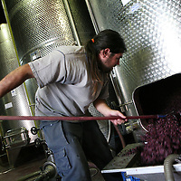 SETTLER'S BOUTIQUE WINE 2009...A worker at the Psagot boutique winery pulls grape skins from a fermenting tank during wine press in the West Bank Jewish settlement of Psagot, Novermber 2009.