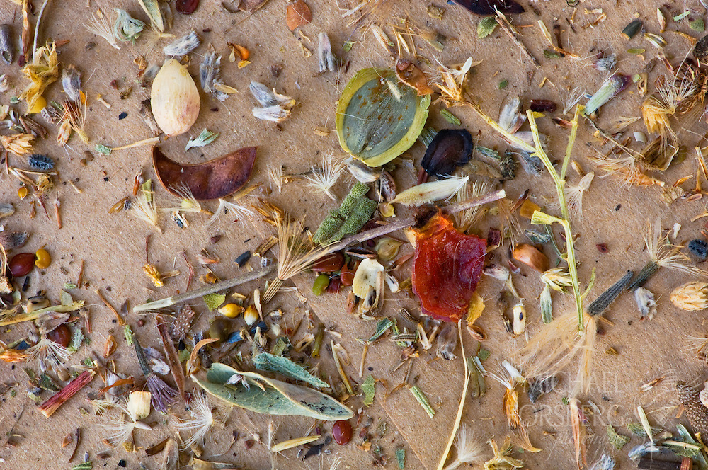 A close-up of a prairie seed mix.  These mixes commonly include 200 plant species.  Hall County, Nebraska.
