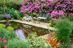 The pond area at Ketley's in late spring with Rhododendron ponticum, Cistus purpureus, C.corbariensis, euphorbia & bronze fennel