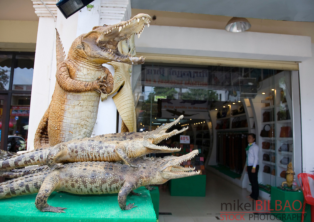 stuff crocodiles outside a leather shop.<br />