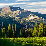 Andrew Whiteford rides the single track of Black's Canyon on Teton Pass at sunset near Wilson, Wyoming.