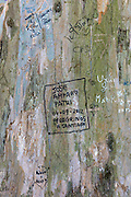 Pilgrims - Peregrinos - on Pilgrim Trail write names in message on tree trunk in  Alameda Park in Santiago de Compostela, Spain