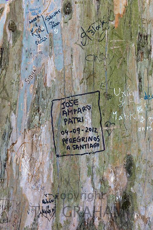 Pilgrims - Peregrinos - on Pilgrim Trail write names in message on tree trunk in  Alameda Park in Santiago de Compostela, Spain