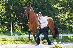 Gavin Robson, (AUS), Apollo, Casper, Diplomaat, Duke, Tygor - Horse Inspection Driving - Alltech FEI World Equestrian Games™ 2014 - Normandy, France.<br /> © Hippo Foto Team - Leanjo de Koster<br /> 25/06/14