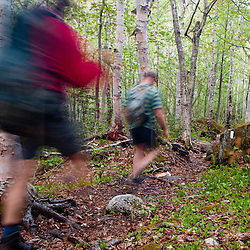 Two men hike through a paper birch forest on the Appalachian Trail on Crocker Mountain in Stratton, Maine.