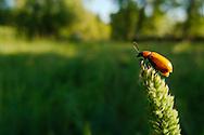 Small bug preparing to take off