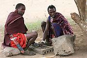 Africa, Tanzania, Masai men play Mancala in the shade of an acacia tree.