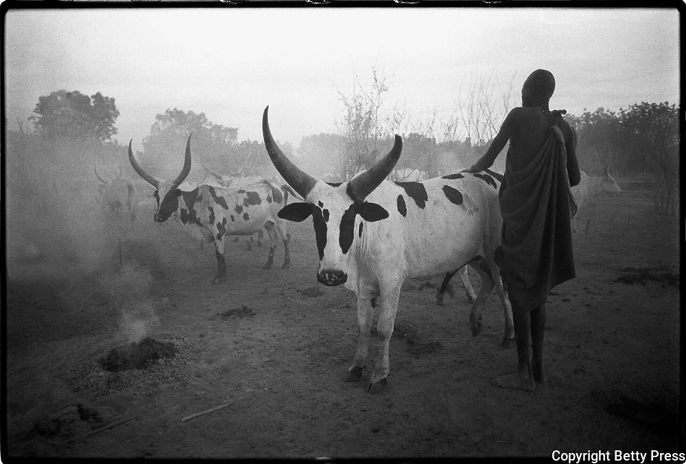 The life of an animal is a parable of man's life.   African proverb<br />
