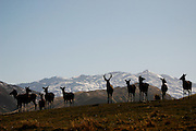 A group of deer stand silhouetted against snow capped mountains.