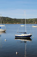 Sailboats anchored in calm waters of Tomales Bay, California