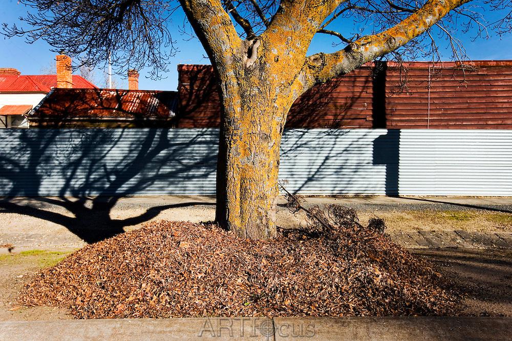 pile of raked leaves around base of tree in Ballarat street