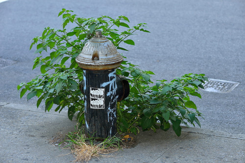 Fire Hydrant with weed on West Broadway, Soho, Manhattan, New York, USA