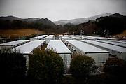 Onagawa  Logements provisoires Kasetsu jutaku  Mars 2012.Depuis le 11 mars 2011, le gouvernement na eu de cesse de trouver des solutions pour loger les quatre vingt milles personnes réfugiés. Lune dentres elles fut daménager des villages dappartement provisoires en préfabriqué. Ici, les Kasetsu jutaku proche du centre de réfugiés Undôjô sôgô taikukan.
