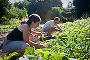 Sarah Brown and Conner Voss are the owners of Diggin' Roots Farm.