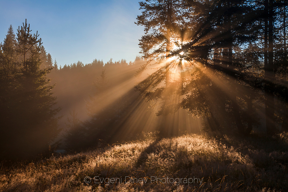 Magic scene with morning sunbeams by the like after the sunrise