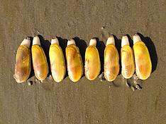 Oregon food, farm and foraging photos