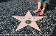 US-LOS ANGELES: The star of Kermit the Frog on  Hollywood Boulevard. PHOTO: GERRIT DE HEUS
