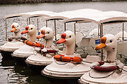 Swan paddle boats line up at Beihai Park in Beijing, China