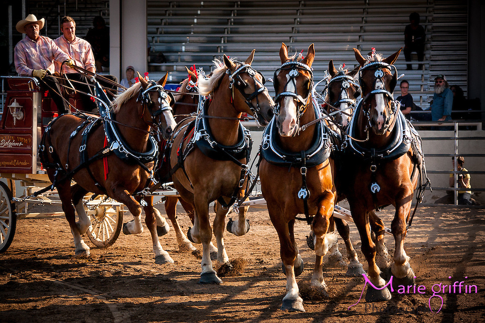 Estes Park Draft Horse Show <br /> By: Marie Griffin Dennis<br /> mariefgriffin@gmail.com<br /> mariegriffinphotography.com