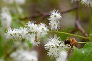 Sao Jose do Rio Preto_SP, Brasil...Programa Biota da Unesp, na foto polinizacao...The Biota program of Unesp, in this photo the pollination.. .FOTO: JOAO MARCOS ROSA / NITRO