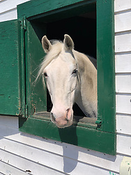 White Horse in a stall